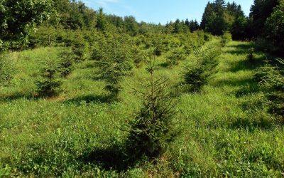 Posadź las – dostaniesz dotacje!